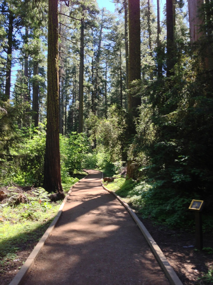 The 1.5 mile Redwood Trail in the North Grove is a must-do.