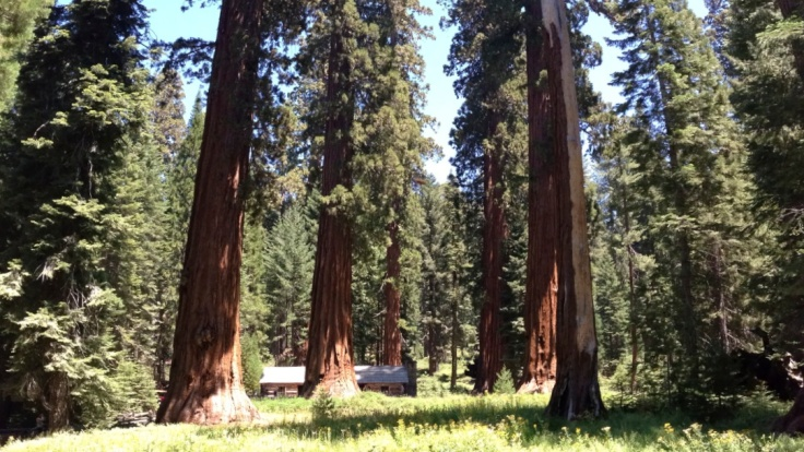 Cabin at the foot of the Giant Sequoias