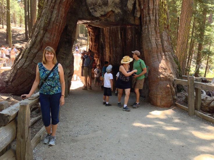 Hollow Giant Sequoia